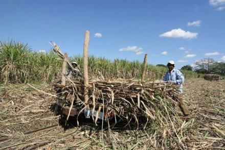 fiji sugar workers